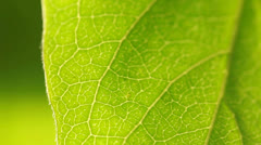 Macro of a leaf growing on tree Stock Footage