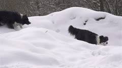 SLOW MOTION: Dog  running in the snow with a ball Stock Footage