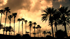 Silhouette of Orlando Palm Trees with Orange Sky HD Video Stock Footage