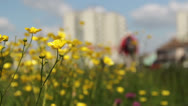 Stock Video Footage of wild flowers in urban setting  0306 07