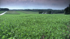 Stock Video Footage of Scenic Potato Farm HD Video