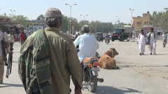 India Rajasthan Jaisalmer traffic around cows in the road  Stock Footage