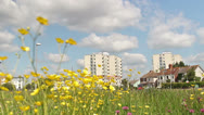Stock Video Footage of wild flowers in urban setting  0306 01