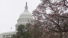 Magnolia kukkiva, US Capitol Building lippu Washington DC, USA Congress Arkistovideo