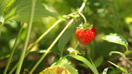 Stock Video Footage of Fresh strawberry closeup