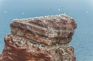 Stock Photo of top of the lange anna on helgoland with many birds