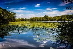 Summer Pond - stock photo