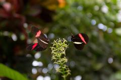 2 butterflies on a plant side by side - stock photo