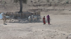 India Rajasthan temple water hole women and cattle 5 Stock Footage