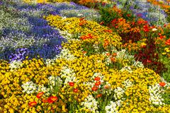 flower bed top view in different colours - stock photo