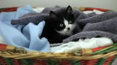 Kitten falling asleep - stock footage