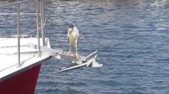 Black-crowned Night Heron On Boat Anchor Stock Footage