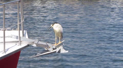 Black-crowned Night Heron On Boat Anchor - stock footage