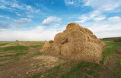 Bales of hay on the farm field Stock Photos