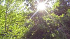 AERIAL: Green trees in spring Stock Footage
