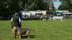 Dog demonstration at Highclere Country fair (4) Otterhound Stock Footage