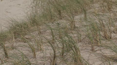 Rows of marram grass in artificial dunes + zoom out soft seawall Stock Footage