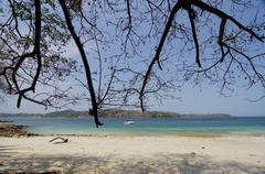branches of leafless tree at the beach in contadora island - stock photo