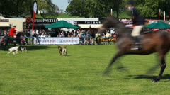 Dog demonstration at Highclere Country fair (12) with Horse hunting Stock Footage