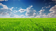 Stock Video Footage of green field and cloudy sky