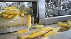 Corn on Production Line Stock Footage