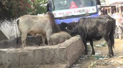 India Pushkar Stock Footage