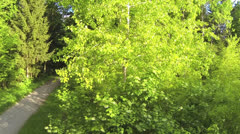 AERIAL: Rising up over the tree Stock Footage