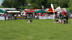 Dog demonstration at Highclere Country fair (14) with Horse hunting Stock Footage
