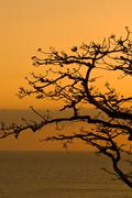 Leafless tree at dusk in pacheca island. las perlas archipelago, panama provi Stock Photos