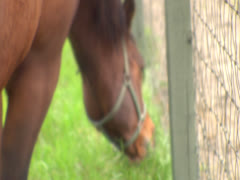 Horse Grazing By a Fence 8 Stock Footage