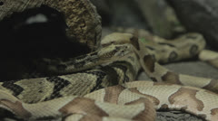 Pile of snakes gets restless c Stock Footage