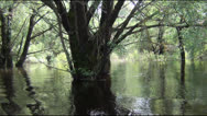 Lake in the spring Stock Footage