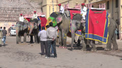 India Rajasthan Amber elephants and mahouts wait casually  Stock Footage