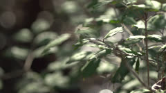 Green Foliage and Small Stream in South Carolina Forest HD Video Stock Footage