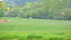 Slow Motion Seagull flying at field Stock Footage