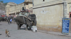 India Rajasthan Amber elephant squeezes past obstacle Stock Footage