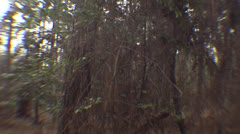 Slow Motion POV in Forest HD Video Stock Footage