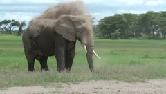 Bull elephant washing in dust Stock Footage