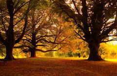 Autumn Wood Stock Photos