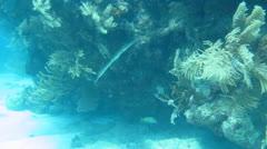 Cabo Pulmo Bay Stock Footage