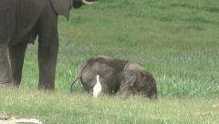 Tired elephant baby sleeps Stock Footage