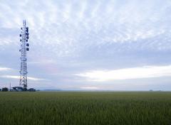 paddy rice field - stock photo