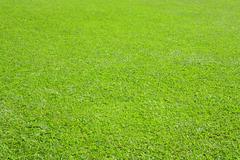 verdant grassland - stock photo