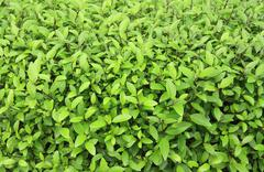 Verdant plant in garden Stock Photos
