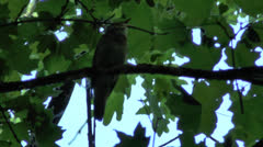 Wonderful singing of a bird Stock Footage