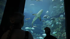 Sharks in the giant aquarium tank Stock Footage