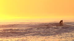 Standing surfer paddles 2, zooming out to golden beach sunrise Stock Footage