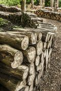 artistic log pile - stock photo