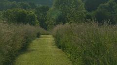 Mowed grass path - stock footage