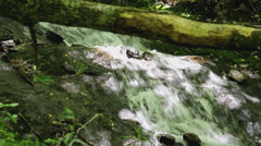 Water fall creek bed dead log Stock Footage